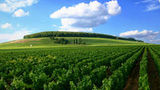 (Full-Day Private Guided Tour of Champagne wih Hotel Pickup ) Gallery - Viator-10913P4.jpg