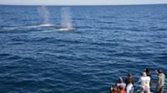 Photo of Blue Whale Perth Canyon Expedition