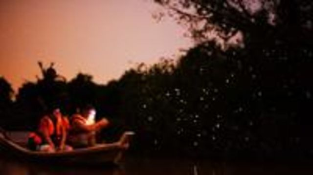 Photo of Fireflies and Kuala Selangor Tour Including Dinner