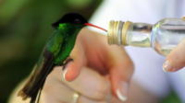 Photo of Rocklands Bird Sanctuary and Montego Bay Highlights Tour
