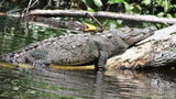 (Private YS Falls and Black River Safari from Falmouth) Gallery - Viator-11943P67.jpg