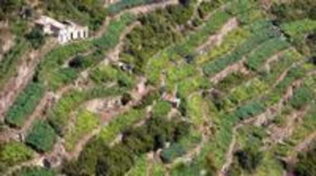 Photo of Cinque Terre: Full-Day Private Tour with Wine Tasting