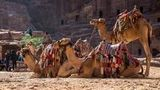 (Private Tour from Amman: Petra with Camel Ride) Gallery - Viator-39670P8.jpg