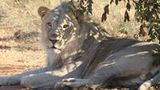 (Pilanesberg National Park and Lesedi Cultural Village Full Day Tour) Gallery - Viator-41504P34.jpg