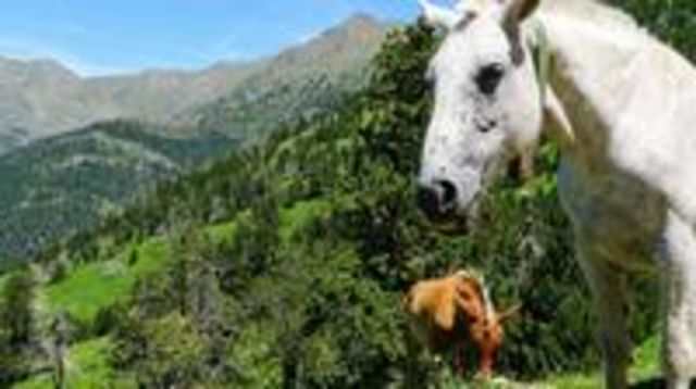 Photo of Self-Guided 5-Day Family Tour in the Pyrenees
