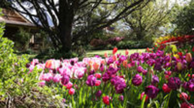Photo of Spring Gardens in the Blue Mountains Private Tour Limited Time Only