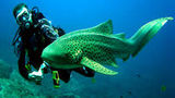 (Full-Day Phuket Sharks Point Scuba Diving Tour for Certified Divers) Gallery - Viator-47420P6.jpg