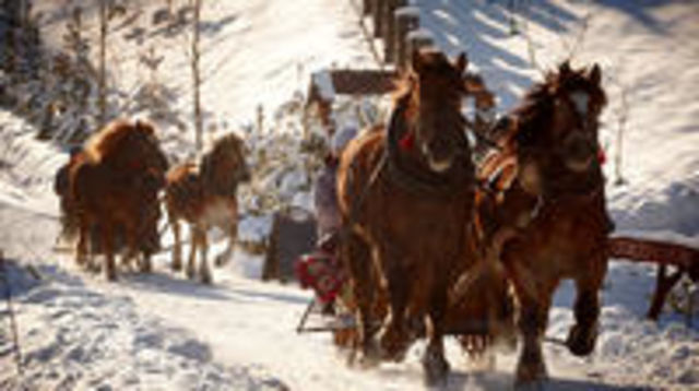 Photo of Horse Sleigh Ride in the Polish Countryside