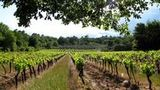 (Private Tour of Small Carpathian Wine Route with The Red Stone Castle) Gallery - Viator-8740P31.jpg