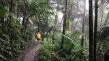 (Private Tour of El Yunque National Rainforest from San Juan) Gallery - Viator-9406P34.jpg