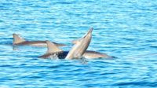 Photo of Swim with Wild Dolphins & Benitiers Island With Breakfast, Lunch & Transport