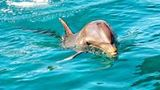(Nature Discovery Tour: Wild Dolphins, Giant Tortoises, Crocodiles and The Wild South) Gallery - Viator-9433P7.jpg