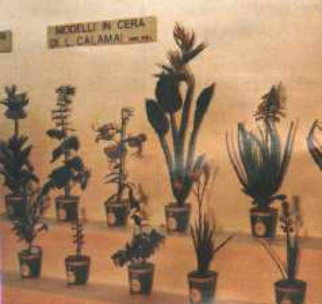 "Photo of MUSEO DI STORIA NATURALE DELL'UNIVERSITA' DI FIRENZE - SEZIONE BOTANICA ""F.PARLATORE"""
